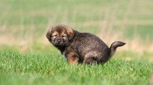 Hondenpoep In Tuin : Hondenpoep tomlow advocaten