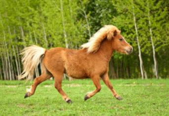 Paardindegang
